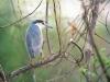 amazing-birds-wallpapers-02