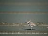 amazing-birds-wallpapers-04