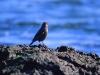 amazing-birds-wallpapers-09