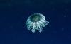 amazing-jellyfish-hd-wallpapers-76