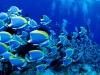 amazing-underwater-wallpapers-001