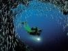 amazing-underwater-wallpapers-005
