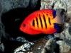 amazing-underwater-wallpapers-006