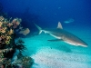 amazing-underwater-wallpapers-007