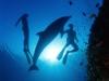 amazing-underwater-wallpapers-008