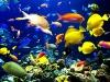 amazing-underwater-wallpapers-009