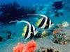 amazing-underwater-wallpapers-010
