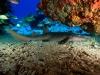 amazing-underwater-wallpapers-011