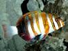amazing-underwater-wallpapers-012