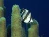 amazing-underwater-wallpapers-051