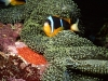 amazing-underwater-wallpapers-052