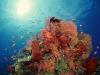 amazing-underwater-wallpapers-055