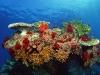 amazing-underwater-wallpapers-056