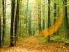 autumn-hq-wallpapers-56