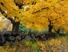 autumn-hq-wallpapers-62