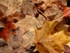 autumn-hq-wallpapers-66