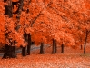 autumn-hq-wallpapers-68
