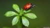 Beautiful Ladybird HD Wallpaper