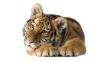 beautiful-tigers-hd-wallpapers-257
