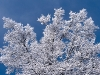 beautiful-winter-wallpapers-152