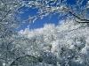 beautiful-winter-wallpapers-155