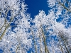 beautiful-winter-wallpapers-186