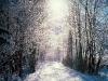 beautiful-winter-wallpapers-243