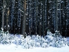 beautiful-winter-wallpapers-259