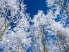 beautiful-winter-wallpapers-262