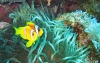 coral-reefs-hd-wallpaper-03
