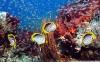 coral-reefs-hd-wallpaper-05