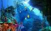 coral-reefs-hd-wallpaper-10