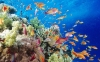 coral-reefs-hd-wallpaper-11