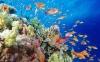 coral-reefs-hd-wallpaper-11