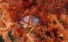coral-reefs-hd-wallpaper-13