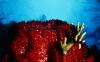 coral-reefs-hd-wallpaper-15
