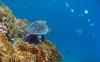 coral-reefs-hd-wallpaper-16