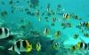 coral-reefs-hd-wallpaper-17