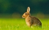 Cute Rabbit HD Wallpaper