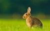 Cute Rabbit HD Wallpaper