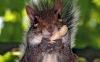 Cute Squirrel HD Wallpaper
