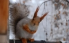 Cute Squirrel HD Wallpaper