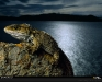 dinosaurs-collection-wallpapers-1110