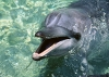 dolphins-underwater-ultra-hq-wallpapers-249