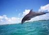 dolphins-underwater-ultra-hq-wallpapers-253