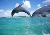 dolphins-underwater-ultra-hq-wallpapers-254