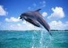 dolphins-underwater-ultra-hq-wallpapers-255