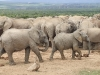 elephant-hq-pictures-and-wallpapers-021