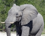 elephant-hq-pictures-and-wallpapers-022