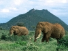 elephant-hq-pictures-and-wallpapers-024